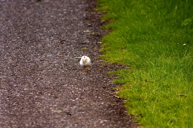 photo credit: mindfulness via photopin cc