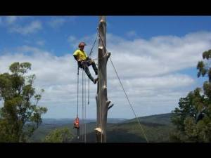 Lowering tress with a rope