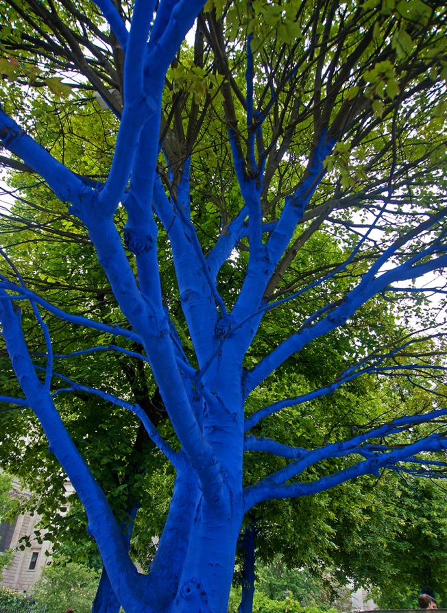 Blue Trees ? -Sue Ridge